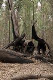Uitgebrande boomboomstam in struik stock afbeeldingen
