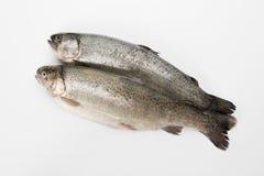 Uitgehaalde regenboogforel Gepelde vissen op een witte achtergrond stock foto