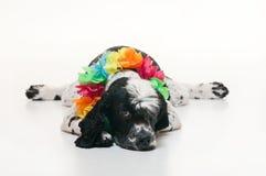 uitgeputte hond die Hawaiiaanse lei draagt Stock Foto