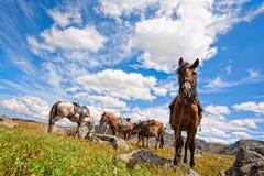 Uitgerust paard Stock Foto's
