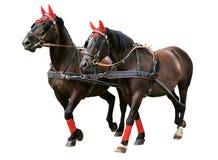 Uitgeruste paarden Stock Foto