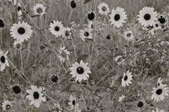 Uitgespreid van bloemen Stock Afbeeldingen