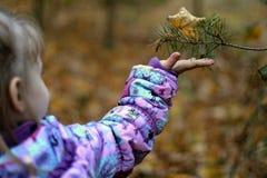 Uitgestrekte hand van kind Het benieuwd zijn door nette tak De daling van de herfst geel blad op boomachtergrond De rente Droog b stock foto's
