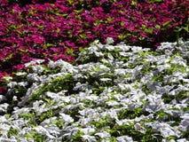 Uitgestrektheid van bloemen Stock Fotografie