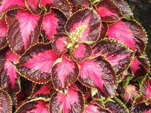 Uitgestrektheid van purpere bloemen Royalty-vrije Stock Foto's