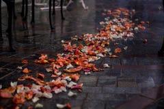 Uitgestrooid met roze bloemblaadjesspoor Royalty-vrije Stock Foto's