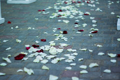 Uitgestrooid met roze bloemblaadjesspoor Royalty-vrije Stock Afbeelding