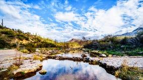 Uitgewassen over kruisend de bijna droge Sycomoorkreek in de McDowell-Bergketen in Noordelijk Arizona stock afbeeldingen