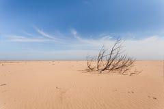 Uitgeworpen overzeese golf op de boom van het zandstrand Geel zand en blauwe hemel Brede hoek Royalty-vrije Stock Afbeeldingen