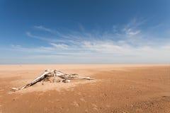 Uitgeworpen overzeese golf op de boom van het zandstrand Geel zand en blauwe hemel Brede hoek dag Stock Afbeelding