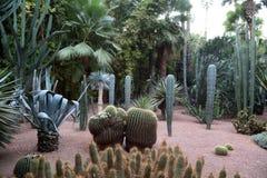 Uitheemse gewassen in de tuin van Majorelle stock afbeeldingen
