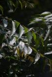 Uitpuilende bladeren Stock Fotografie