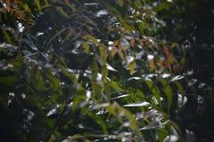 Uitpuilende bladeren Stock Afbeelding