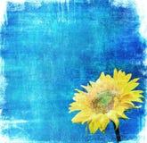 Uitstekend beeld van zonnebloem op grungeachtergrond Stock Foto's