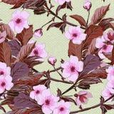 Uitstekend behang naadloos patroon met roze Japanse kersenbloesem Van kersentak of China rozen, sakuratak Stock Afbeelding