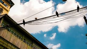 Uitstekend Blokhuis met Vogels op Elektrische Draden - Lage Hoek Vi stock afbeeldingen
