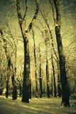 Uitstekend de winterlandschap Stock Afbeeldingen