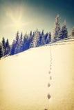 Uitstekend de winterlandschap Stock Afbeelding