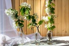 Uitstekend glas met tot bloei komende takken van kers royalty-vrije stock afbeeldingen