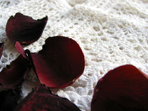 Uitstekend kant met droge roze bloemblaadjes stock afbeelding