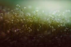 Uitstekend kijk van bloemenachtergrond Stock Foto