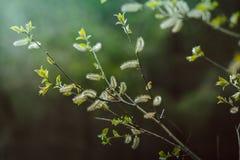 Uitstekend kijk van bloemenachtergrond Stock Afbeeldingen