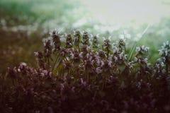Uitstekend kijk van bloemenachtergrond Stock Afbeelding