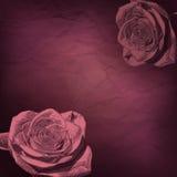 Uitstekend nam Bloemen toe Stock Afbeeldingen
