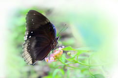 Uitstekend stijlclose-up van vlinderwit geïsoleerde achtergrond Royalty-vrije Stock Foto's