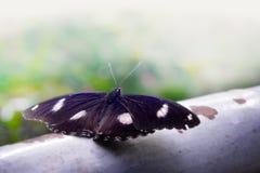 Uitstekend stijlclose-up van vlinderwit geïsoleerde achtergrond Stock Foto