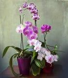 Uitstekend stilleven, binnenlands met de regeling van de orchideeinstallatie Royalty-vrije Stock Foto