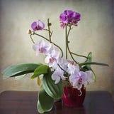 Uitstekend stilleven, binnenlands met de samenstelling van de orchideeinstallatie Stock Afbeelding