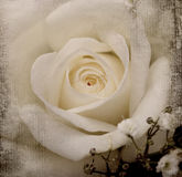 Uitstekende achtergrond met bloem Stock Foto