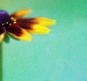 Uitstekende achtergrond met mooie bloem royalty-vrije stock afbeelding