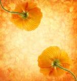 Uitstekende achtergrond met oranje papavers Royalty-vrije Stock Fotografie