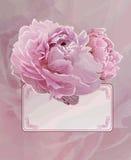 Uitstekende achtergrond met Roze pioenbloemen Stock Foto's