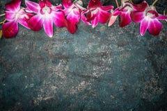 Uitstekende achtergrond met roze purpere orchideebloemen, hoogste mening stock afbeeldingen
