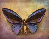 Uitstekende achtergrond met vlinder Stock Afbeelding