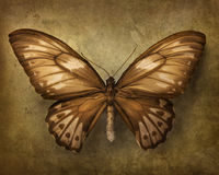 Uitstekende achtergrond met vlinder stock foto
