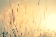 Uitstekende achtergrond van de weide de Bloemenaard stock foto