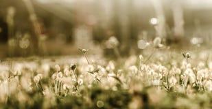 Uitstekende bloem Stock Afbeelding
