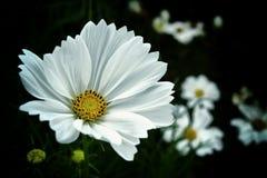 Uitstekende bloem stock foto