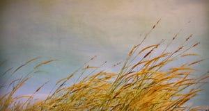 Uitstekende bloem van het gras Stock Fotografie