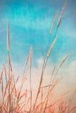 Uitstekende bloem van het gras Stock Afbeeldingen