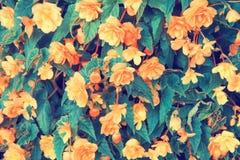 Uitstekende bloemachtergrond Stock Foto's