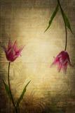 Uitstekende bloemen Royalty-vrije Stock Fotografie