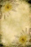Uitstekende bloemen Stock Afbeelding