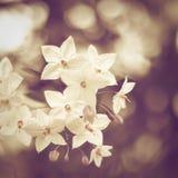 Uitstekende bloemen Stock Foto