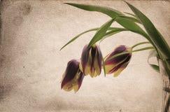Uitstekende bloemen Stock Afbeeldingen