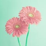 Uitstekende bloemen Royalty-vrije Stock Afbeeldingen